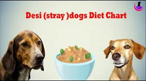 dog food chart desi stray dogs youtube
