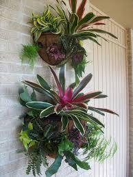 best 25 vertical wall planters ideas on pinterest wall gardens