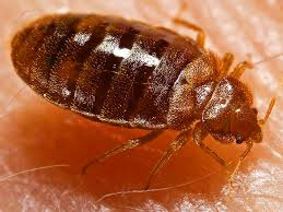Bug Bombs For Bed Bugs Foggers