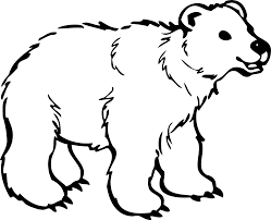 beautiful polar bear coloring pages for kids with bear drawing