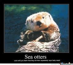 Sea Otter Meme - otter meme google search otter spirit animal pinterest otter
