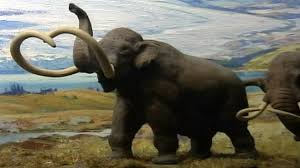 woolly mammoth resurrected scientists abc