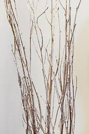 tree branches sale 20 60 saveoncrafts