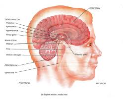 Brainstem Mass Incapacitation