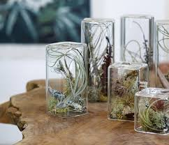 decoration inspiration unusual air plants home decoration inspiration ideas and gifts