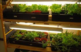 maine home garden news page 4 of 7 cooperative extension