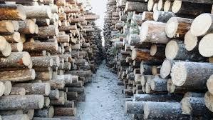 botwood wood chip project as biofuel plant bites dust