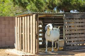 make house diy make a free goat house from pallets weed em reap