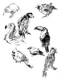 brush pen bird sketches by yardsalecouch on deviantart
