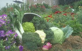 monthly garden calendar for southeast united states