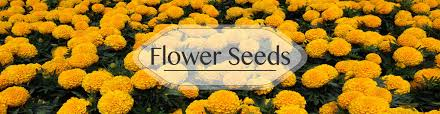 buy flower seeds online perennial flower seeds exporters in india