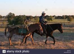 a cowboy bringing home the family christmas tree western style