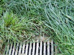 nashville drainage middle tn