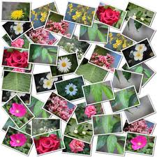 flower and leaf photo collage free stock photo public domain