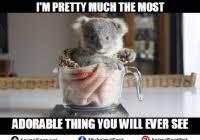 Angry Koala Meme - coolest high koala meme angry koala baby meme generator memes
