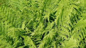 Free Picture Leaf Nature Fern Free Images Nature Field Flower Green Jungle Botany