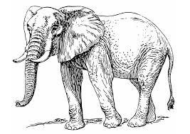 coloring elephant img 12933