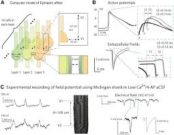 propagation of epileptiform activity can be independent of