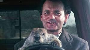 Bill Murray Groundhog Day Meme - is your life like groundhog day carolina career college