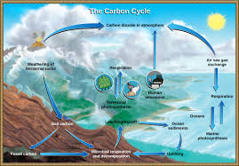 biogeochemical cycles concepts of biology