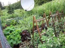 Vegetable Garden Blogs by Planting A Vegetable Garden On A Slope The Garden Inspirations