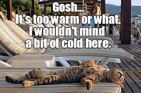 Funny Cold Meme - lolcats cold lol at funny cat memes funny cat pictures with