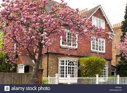 a cherry tree blooming in front of an arts and crafts style house
