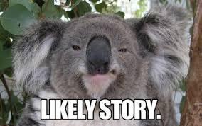 koala meme google search memes pinterest meme and memes