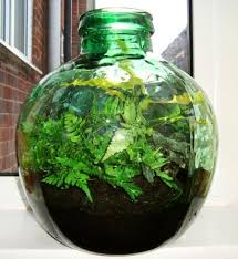 sealed bottle garden how to create and grow a terrarium bottle garden our house plants