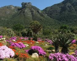 Kirstenbosch National Botanical Garden Kirstenbosch Botanical Gardens Home Of Some 3 500 Species Of
