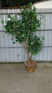 imitation tree realistic attractive tree in honiton