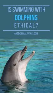 Six Flags Dolphin Swim How To Grade Captive Dolphin Facilities 12 Key Factors