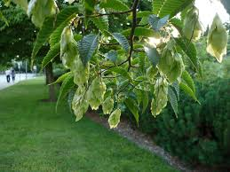 Plants That Do Not Need Much Sunlight by Trees That Grow In Full Shade