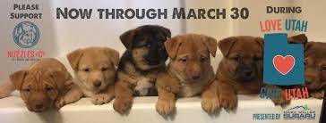 boxer dog utah deek boxer dog for adoption