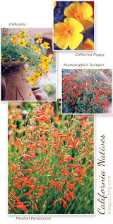 native plants landscaping best 25 california native garden ideas on pinterest california