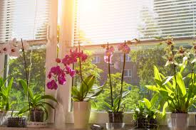 growing plants indoors 29 tips for houseplants reader u0027s digest