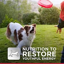 science diet mature active longevity original dry dog food
