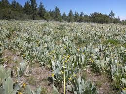 northern california native plants california native plant society blog u2013 page 2 u2013 dedicated to the
