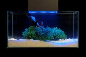 fluval edge 6 gallon aquarium with 21 led light