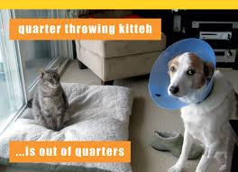 Funny Cat And Dog Memes - funny birthday cat 16 high resolution wallpaper funnypicture org