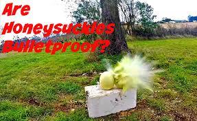 are honey dews bulletproof 204 ruger style youtube