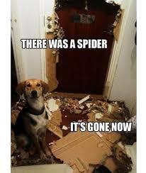 Best Animal Memes - best animal memes of 2013 spider dog door meme