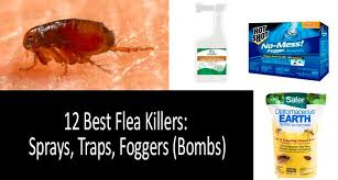 Bed Bug Fogger How To Kill Fleas Quickly Top 12 Best Flea Sprays Traps And