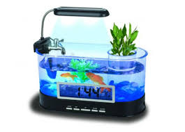 cuisine small freshwater fish for aquariums aquarium design ideas