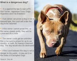 american pitbull terrier in uk kennelling seized dogs places u0027burden u0027 on police budgets bbc news