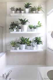 Best Bathroom Shelves Floating Bathroom Shelves What S Best For Plants