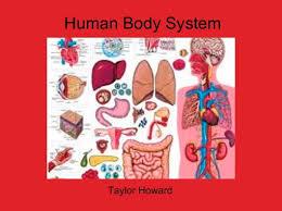 Online Human Body Human Body System