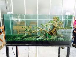 Aquascaping With Driftwood Masterpiece Bonsai Driftwood A32 Xlarge Aquarium Products