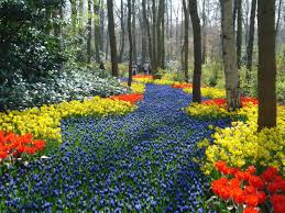 13 beautiful fields of flowers around the world