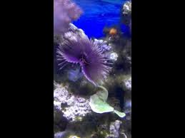 purple feather amazing purple feather duster building its
